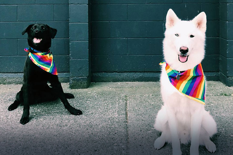 Tucker and Gronk on Pride Day